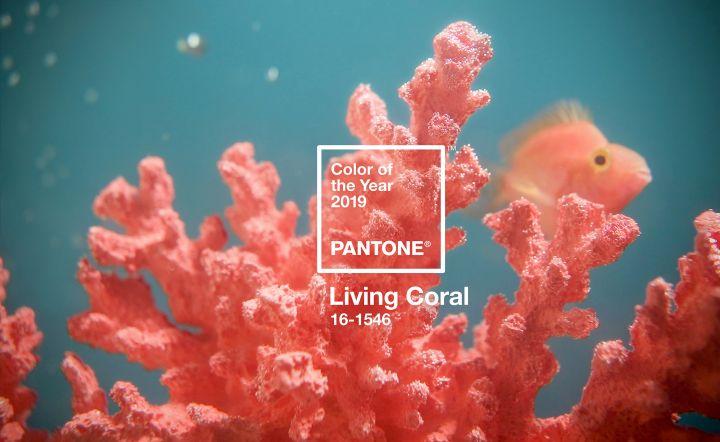 Ý nghĩa và cách sử dụng màu Pantone của năm 2019 Living Coral – Now Academy